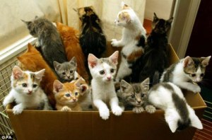 LOTS of animals need homes, we can't help all of them, or can we?!!  Reiki can!